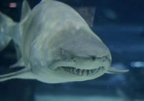 Пенсионерка погибла от зубов акулы