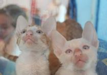 В Смоленске прошла юбилейная выставка кошек