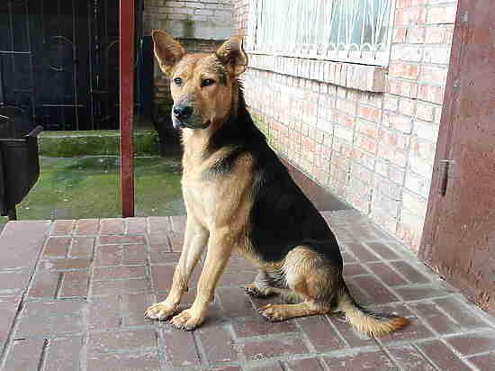 МК в Смоленске» составил прогноз для города в год Желтой собаки